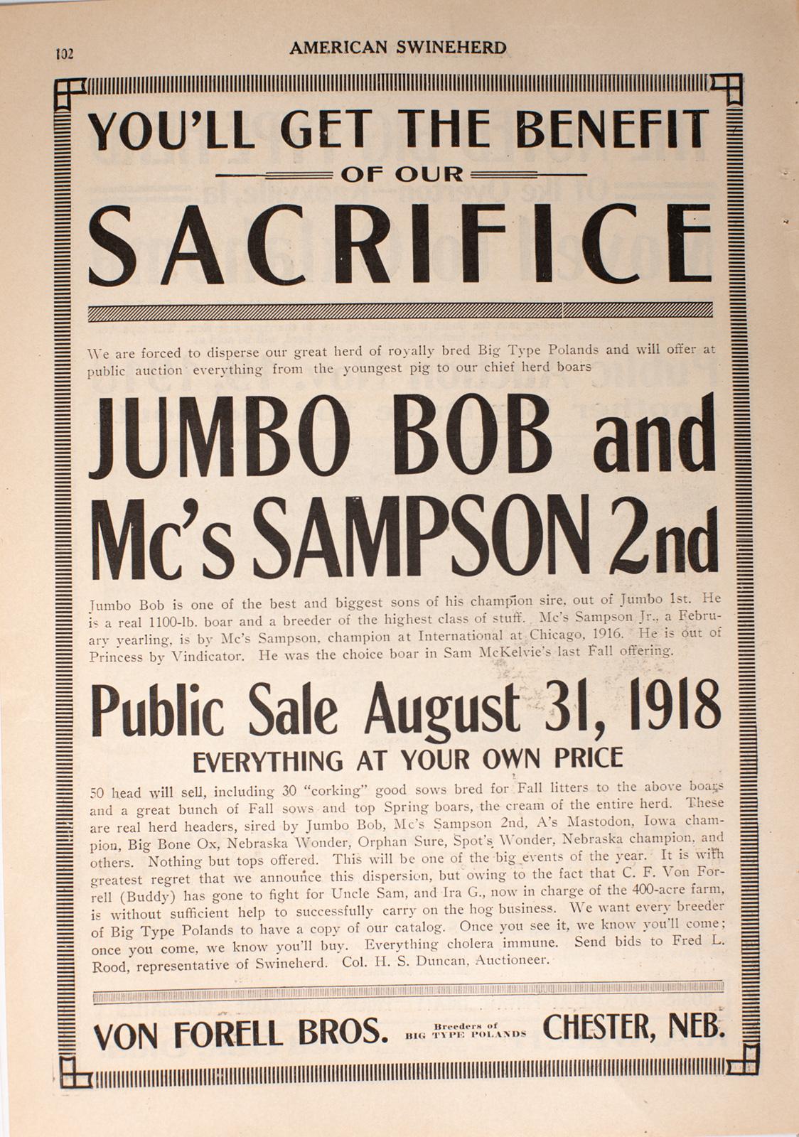 Auction Poster for Poland Pigs in Chester Nebraska 1918 Image